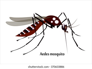 Mosquito species aedes aegyti side - isolated