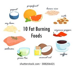 most foods can fat burning top ten item  vector illustration