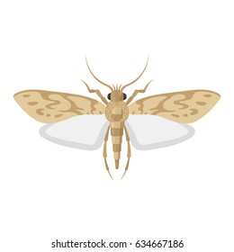 Moth bug vector illustration on white background. Top view of an insect pest of a butterfly moth.