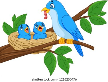 Mother blue bird feeding babies in a nest