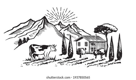 Mountain landscape. Cow in black.  Vine plantation landscape. Sketch style. Vector illustrations.