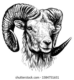 Mountain sheep. Sketchy, black and white, hand-drawn portrait of a mountain sheep on a white background.