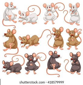 Mouse with different fur color illustration