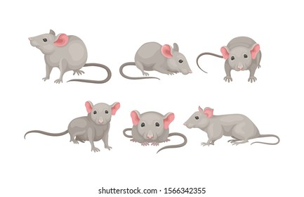 Mouse in Different Poses Vector Set. Small Rodent With Gray Coat and Long Tail