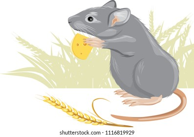 Mouse with a piece of cheese and spikelet. Vector