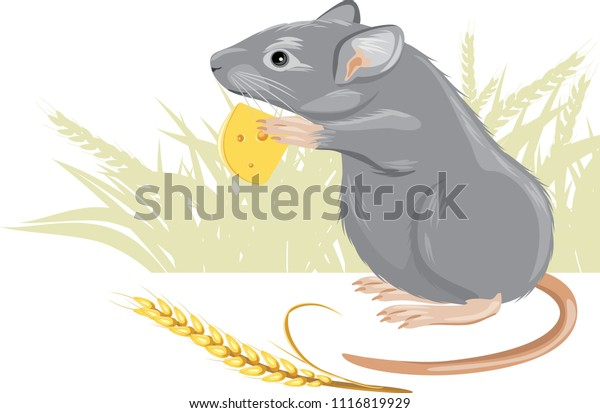 mouse-piece-cheese-spikelet-vector-600w-