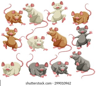 Mouse and rat in different colors