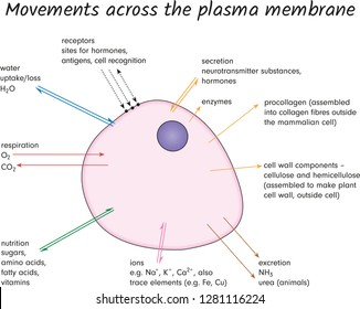 Movements across the plasma membrane
