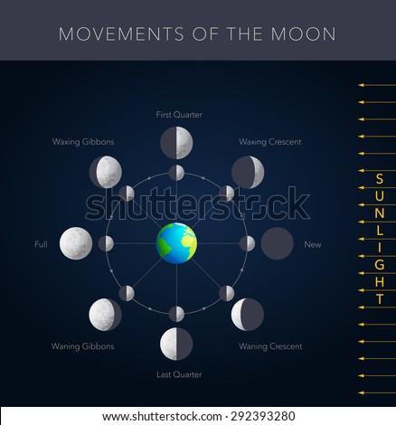 Astonishing Movements Moon 8 Lunar Phases Vector Stock Vektorgrafik Lizenzfrei Wiring Digital Resources Instshebarightsorg