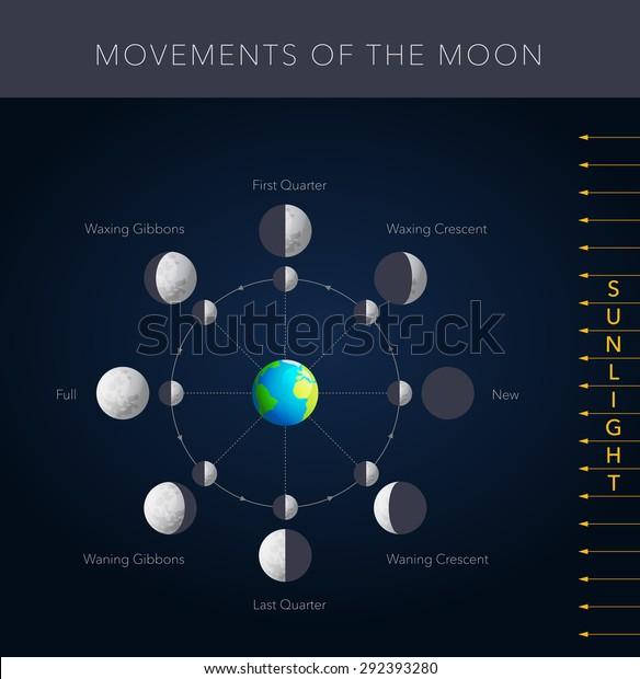 Movements Moon 8 Lunar Phases Vector Stock Vector (Royalty
