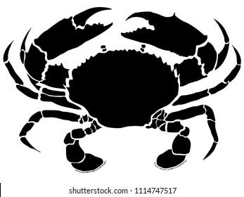 Mud crab illustration