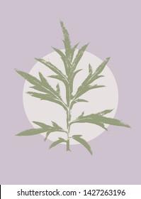 MUGWORT, Artemisia vulgaris scan tracing