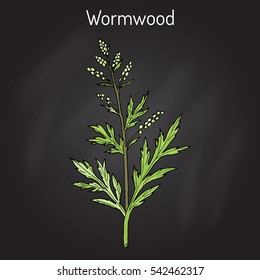 Mugwort, or common wormwood (Artemisia vulgaris), medicinal plant. Hand drawn botanical vector illustration
