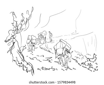 Mule caravan carrying load in mountains, This type of cargo transport widely used in himalayas, Vector sketch, Hand drawn linear illustration