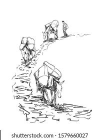 Mule caravan walking in mountains with load on back, This type of cargo transport widely used in himalayas, Vector sketch, Hand drawn illustration