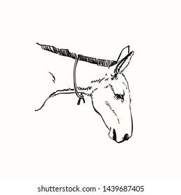 Mule head, Vector sketch, Hand drawn linear illustration