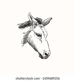 Mule head, Vector sketch, Hand drawn illustration