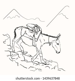 Mule walking on mountains with load on his back, This type of cargo transport widely used in himalayas, Vector sketch, Hand drawn linear illustration