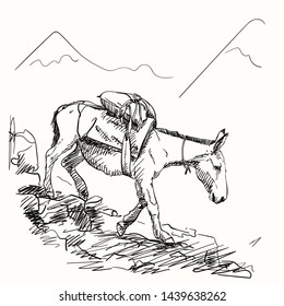 Mule walking on mountains with load on his back, This type of cargo transport widely used in himalayas, Vector sketch, Hand drawn illustration