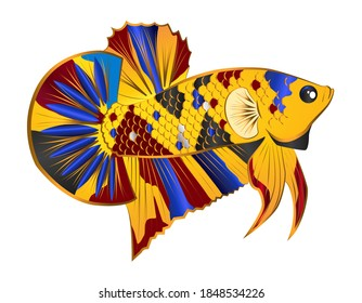 multicolor betta fish vector on white background with for logo
