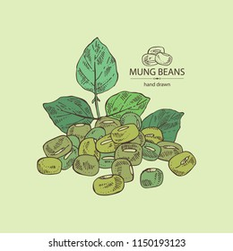 Mung beans: leaf, plant, pod and seed of mung beans. Vector hand drawn illustration
