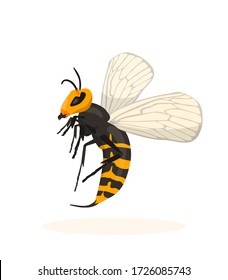 Murder hornet - side view. Vespa mandarinia is the largest hornet in the world.
