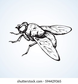 Musca domestica. Big hairy diptera warble hum horsefly on light sky backdrop. Linear dark ink hand drawn picture sketchy in art retro scribble style pen on paper. Close up view with space for text