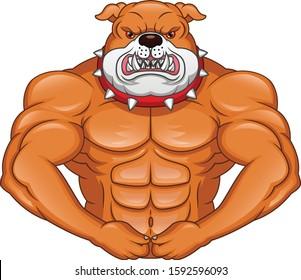muscle english Bulldog Cartoon on a white background