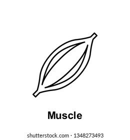 Muscle, organ icon. Element of human organ icon. Thin line icon for website design and development, app development. Premium icon