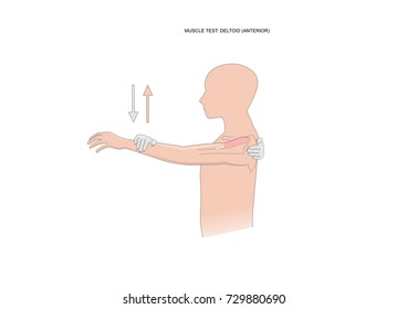 muscle test: deltoid (anterior portion). Test used in kinesiology, neurology, physiotherapy