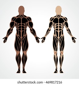 Muscular man compared to bodybuilder vector illustration. Fitness model bodybuilder. Isolated male muscular healthy body. Human muscle system of a strong man illustrated scheme. Human design.