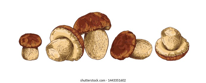 Mushroom boletus hand drawn vector illustration. Sketch food drawing on a white background.