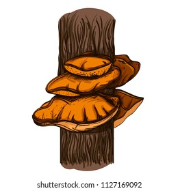Mushroom growing on a tree. Vector illustration isolated on white background.