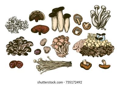 Mushroom hand drawn set. Isolated vector illustration. Organic vegetarian product for restaurant menu or packaging. Honey agaric, shiitake, edible mushroom, enoki mushrooms, eringi. Engraving