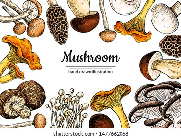 Mushroom hand drawn vector frame. Sketch organic food drawing template. Champignon, truffle, porcini, chanterelle, Great for menu label product packaging