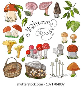 Mushroom hand drawn vector illustration. Isolated Sketch food drawing. Boletus, chanterelle, yellow boletus, rough boletus, russula, coral milky. Organic vegetarian product for menu, label, packaging.