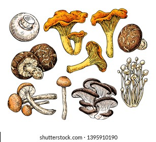 Mushroom hand drawn vector illustration. Sketch food drawing isolated on white background. Champignon, enokitake, oyster, honey agaric,  chanterelle, shiitake. Organic vegetarian product.