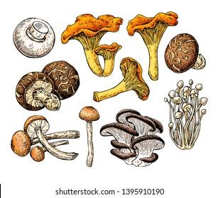 Mushroom hand drawn vector illustration. Sketch food drawing isolated on white background. Champignon, enokitake, oyster, honey agaric,  chanterelle, shiitake. Organic vegetarian product.
