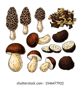 Mushroom hand drawn vector illustration. Sketch food drawing isolated on white background.  Morel, truffle, porcini, wood ear. Organic vegetarian product. Great  for menu, label, product packaging, re