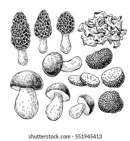 Mushroom hand drawn vector illustration. Sketch food drawing isolated on white background.  Morel, truffle, porcini, wood ear. Organic vegetarian product. Great  for menu, label,  packaging, re