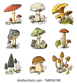 Mushroom set hand drawn engraved. vintage organic vegetarian food. champignon, chanterelles, honey fungus, fly agaric, amanita, common stinkhorn, penny bun, red-capped scaber stalk for menu, packaging