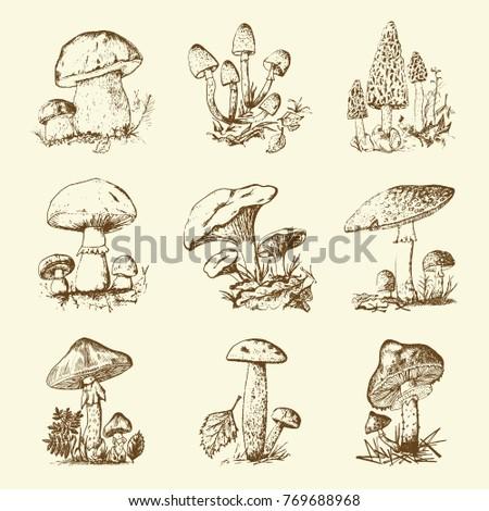 Mushroom Set Hand Drawn Engraved Vintage Stock Vector