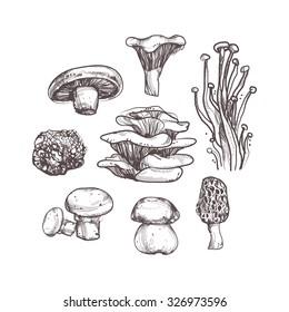 Mushroom set on white background