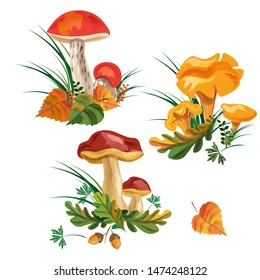 mushroom set. three kinds of mushrooms. boletus, mushroom chanterelle, orange-cap boletus. vector watercolor. EPS 10.
