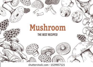 Mushroom sketch background. Organic food sketch with shiitake champignon truffle and oyster mushrooms. Vector hands drawings doodle set illustration for vegetarian recipe book
