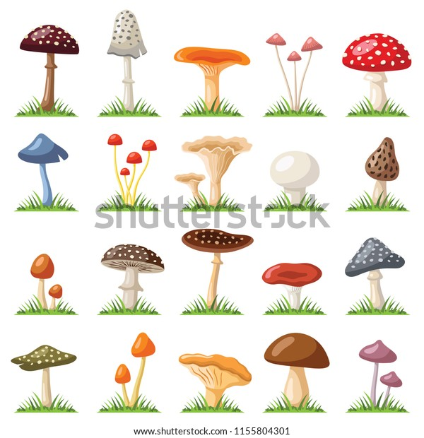 Mushroom Toadstool Collection Vector Color Illustration Stock