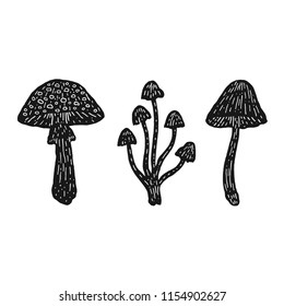 Mushrooms black vector vintage illustration amanita fly-agaric toadstool grebe dabchick honey agaric ingredient witch potion poison engraving set isolated on white background