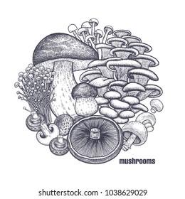 Mushrooms in circle. Template of signboard, poster, cover. Bolete, Portobello, Shimeji, Champignon, Oyster mushrooms, Enoki. Black, white. Vector illustration vintage engraving
