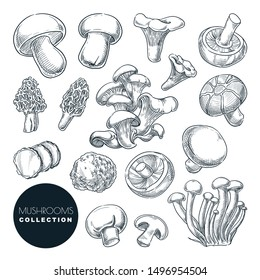 Mushrooms collection, sketch vector illustration. Hand drawn food ingredients isolated design elements. Autumn harvest of forest edible mushrooms.