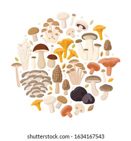 Mushrooms collection of vector flat illustrations isolated on white in round. Cep, chanterelle, honey agaric, enoki, morel, oyster mushrooms, King oyster, shimeji, champignon, shiitake, black truffle